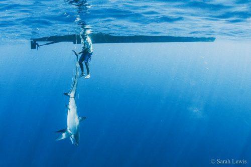 thresher shark and boat
