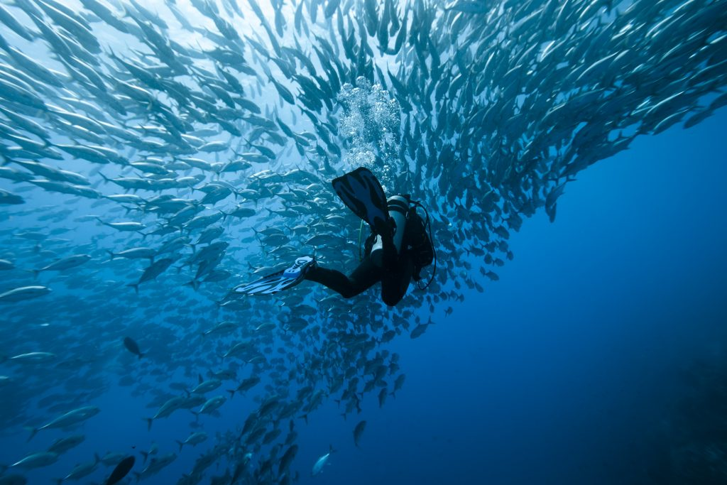 Top 5 Dive Sites in Komodo