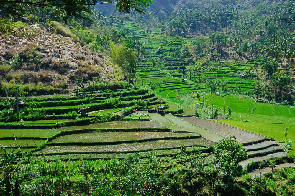 Bali Rice Fields Destinations