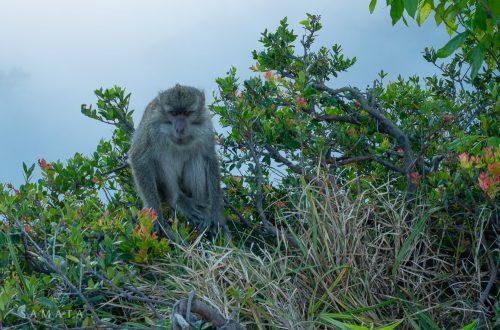 Monkey at Kelimutu