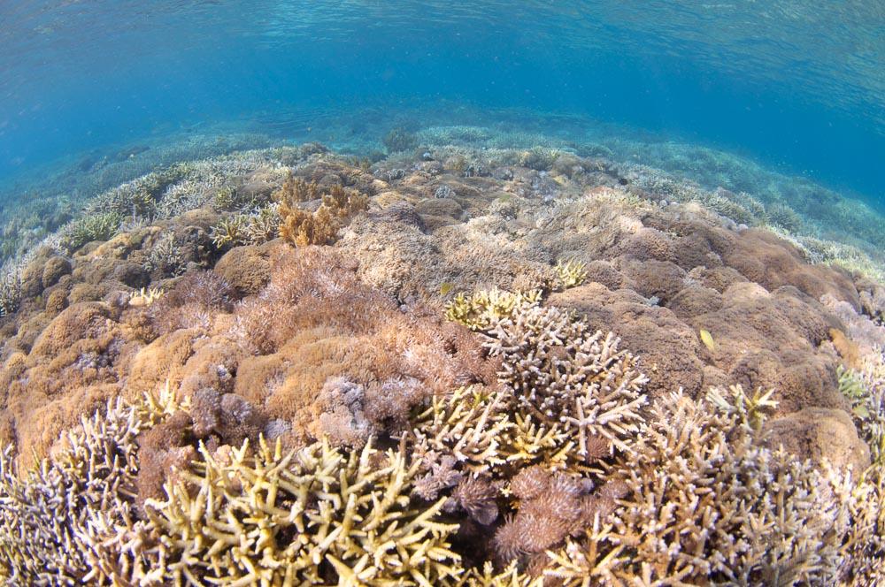 Batu Monco Coral
