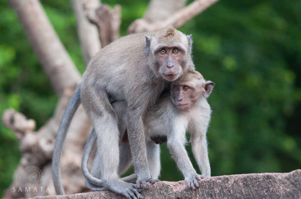 Monkeys and Marsupials