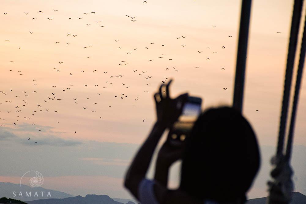 Bats at Sunset Top Five Experience
