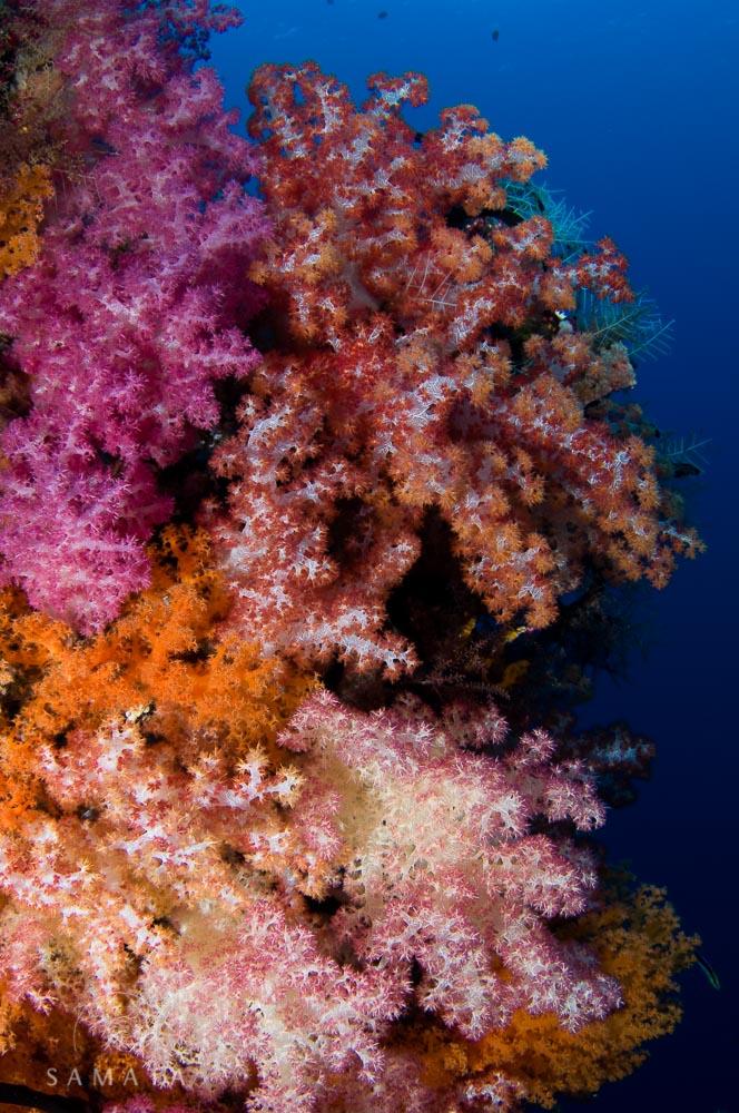 Soft Corals Raja Ampat