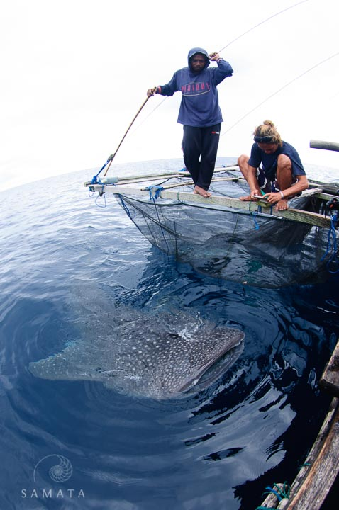 Photographing a whale shark at a bagan