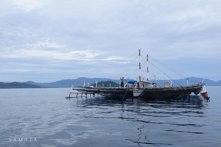 bagan fishing whale shark