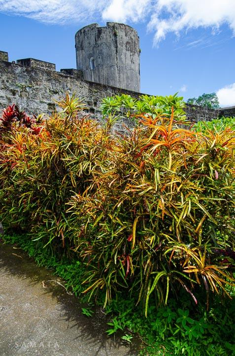 Plants Fort Belgica Banda Islands