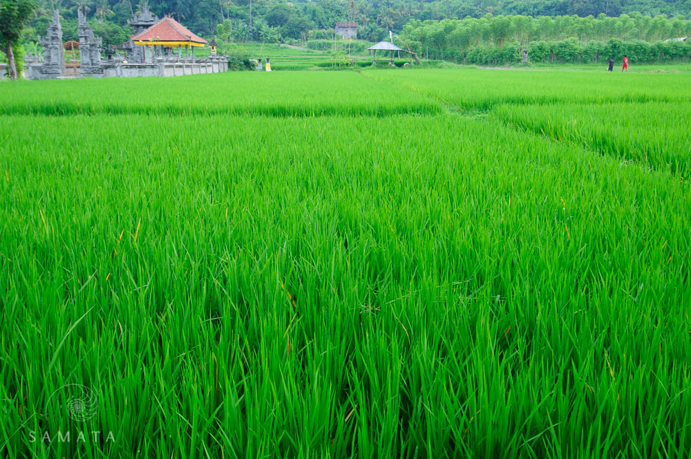 Rice Terraces Temple