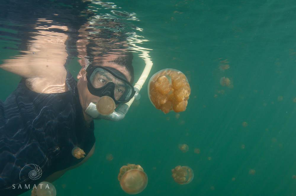 Swimming with Jellyfish