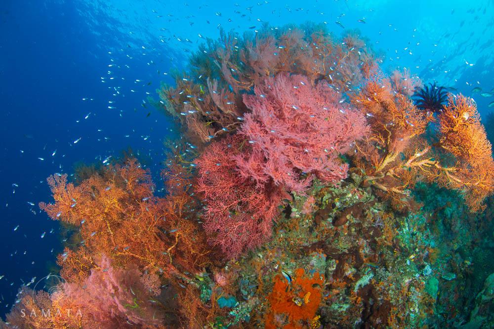 magic mountain soft corals