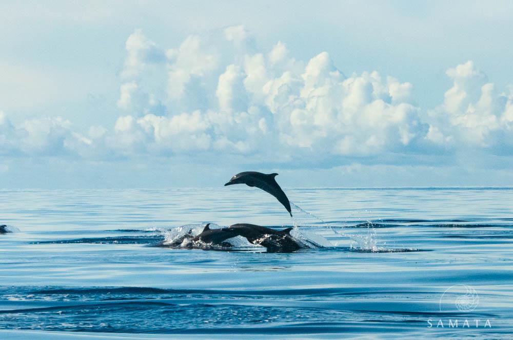 Raja Ampat Dolphins
