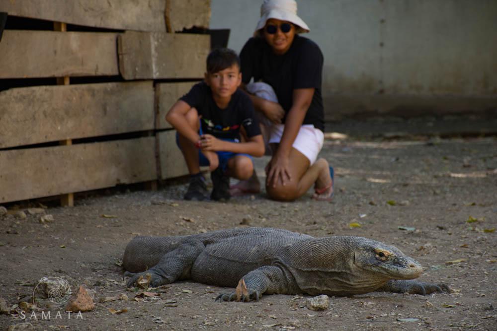 Visitors and Komodo Dragon