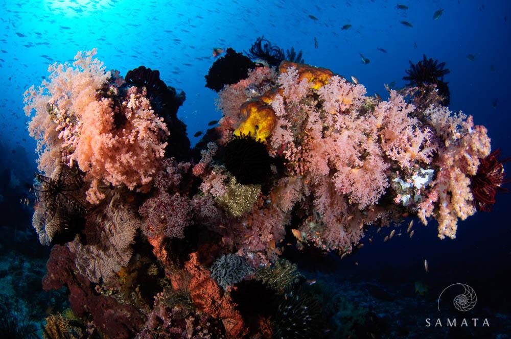 Soft Corals Castle Rock